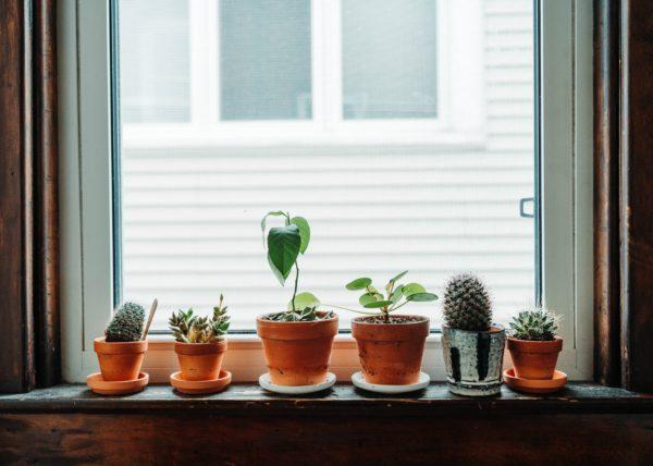 Various succulents on window ledge.